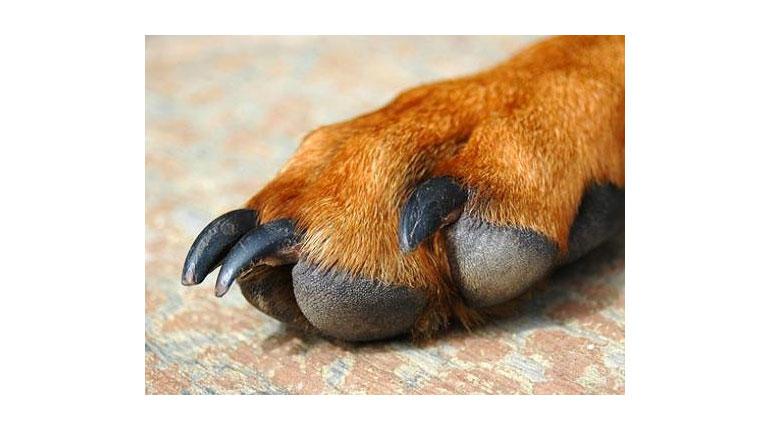 Cómo cortar las uñas a nuestra mascota