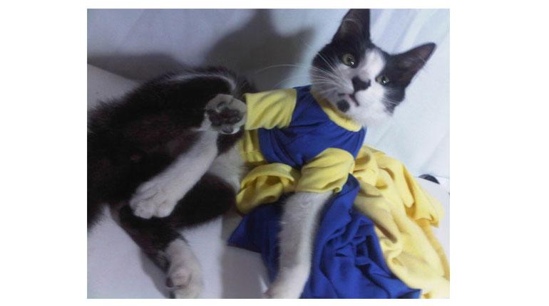 Cómo hacer ropa para perros o gatos